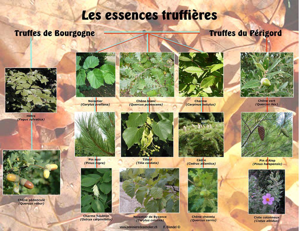 les_essences_truffieres